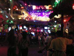 Discot Tiger