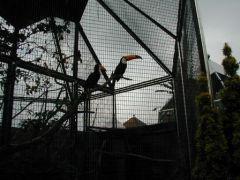 リーズ城の鳥