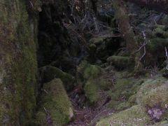 苔むした岩石庭園