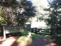 otama forest入口